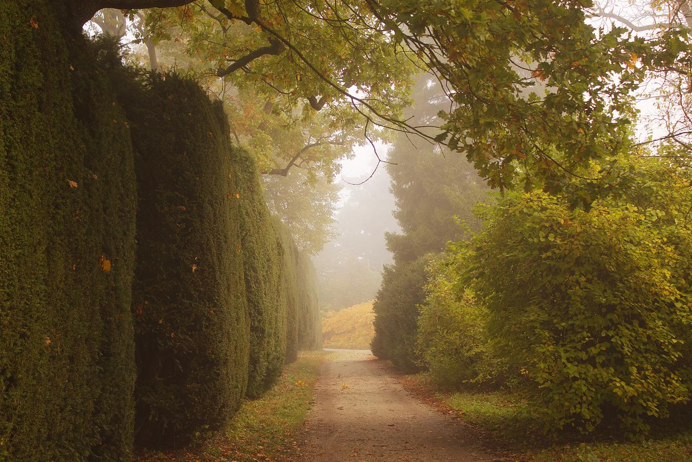 Podzimní ráno v parku