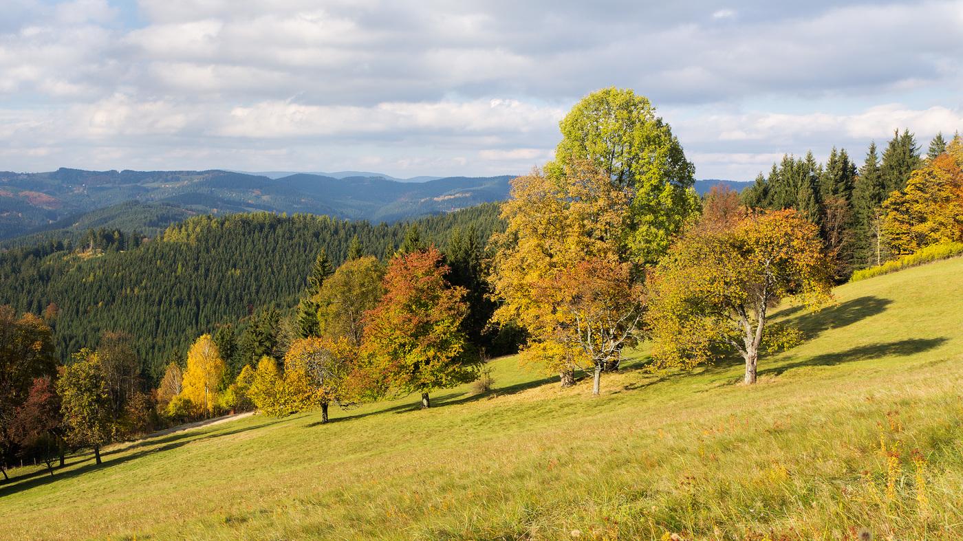 Podzim v Javorníkách
