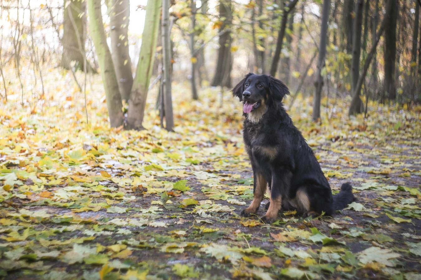 Podzimní procházka s Heliosem :-)