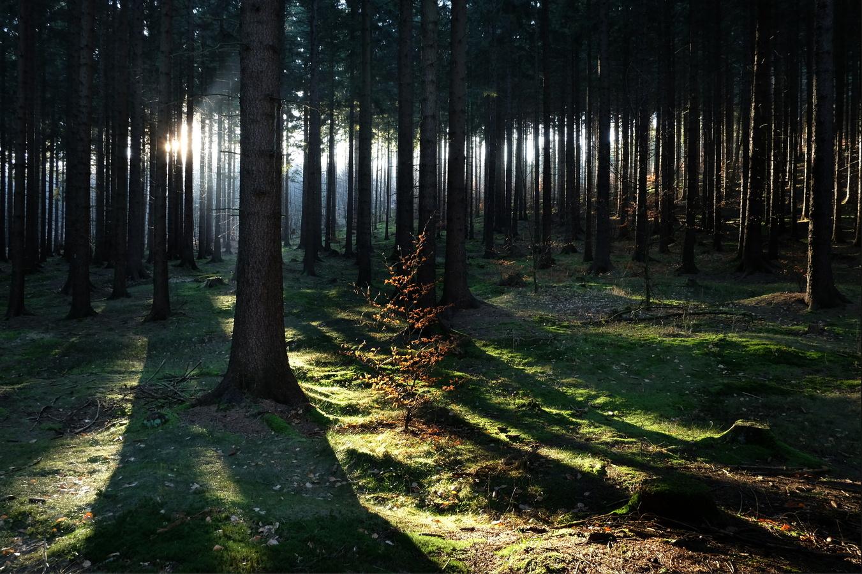 V čarovném lese...