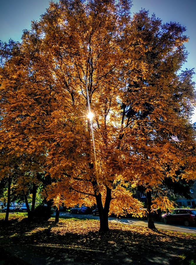 Podzim ve městě zeleně