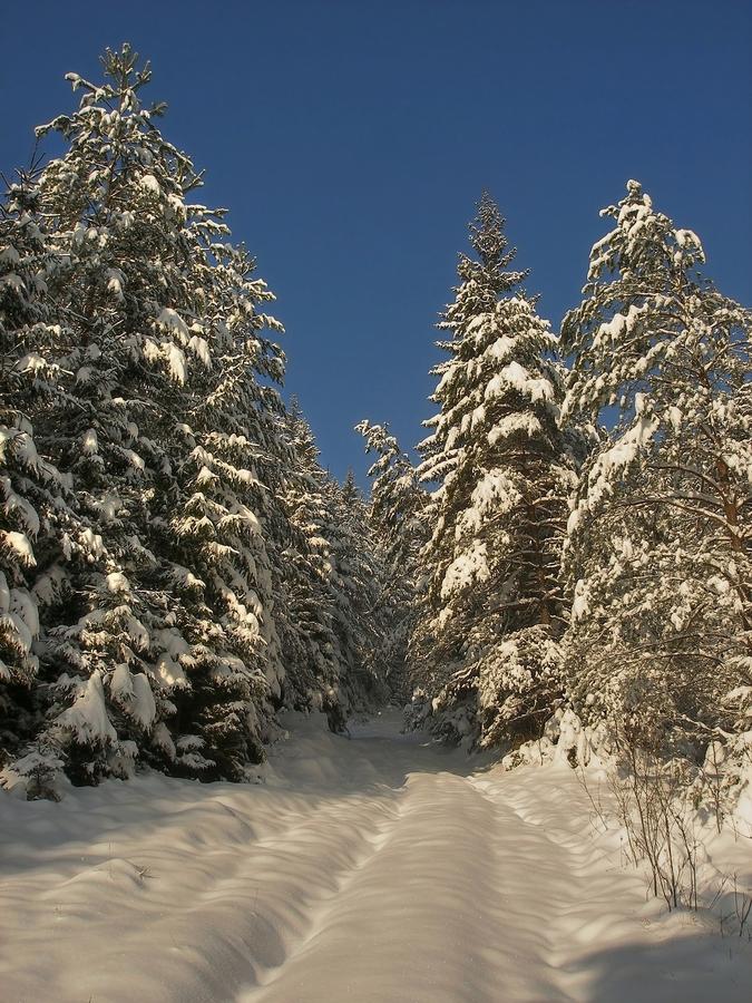 Zasneženým lesom