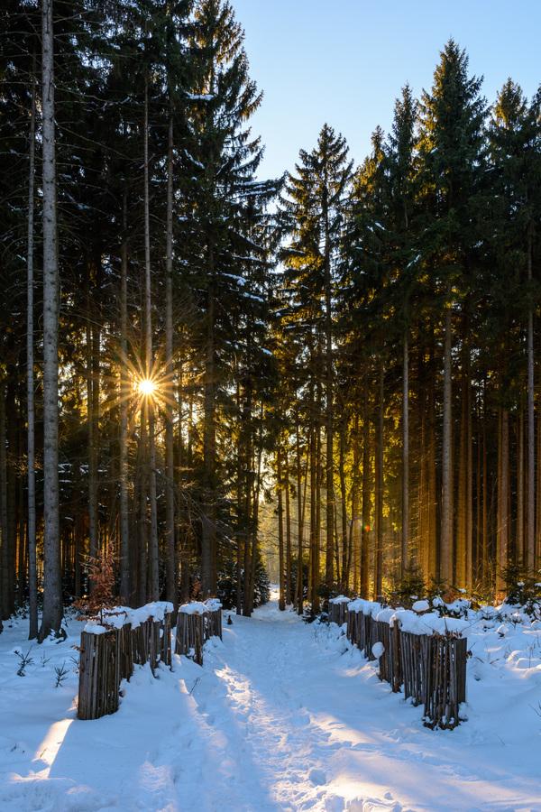 Carovny les