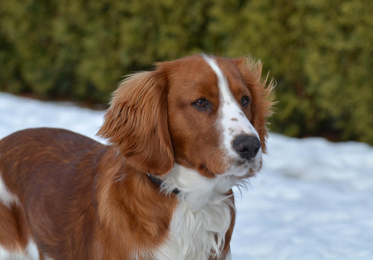 Fotka z profilu mého psa..