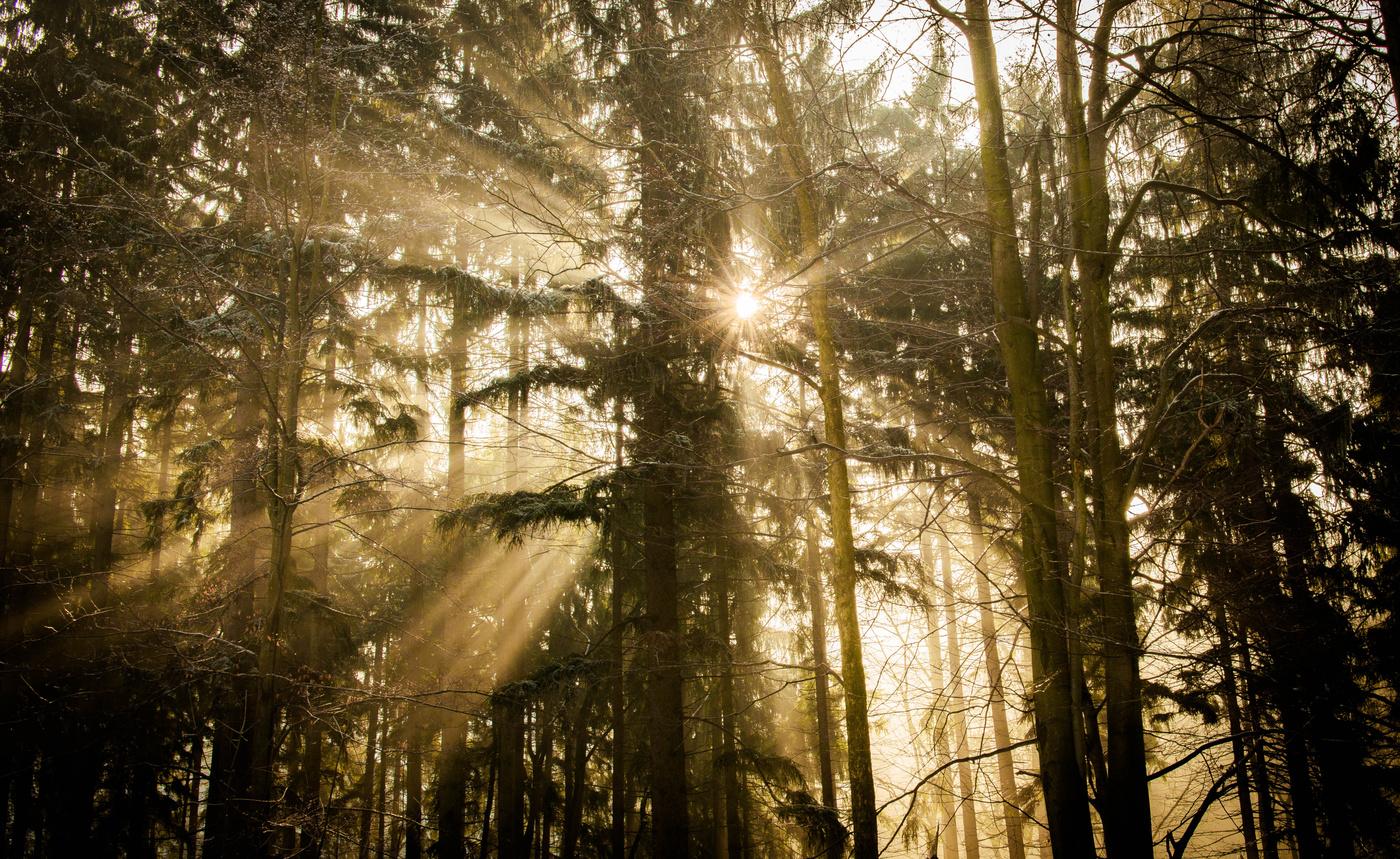 Na hranici světla a mlhy