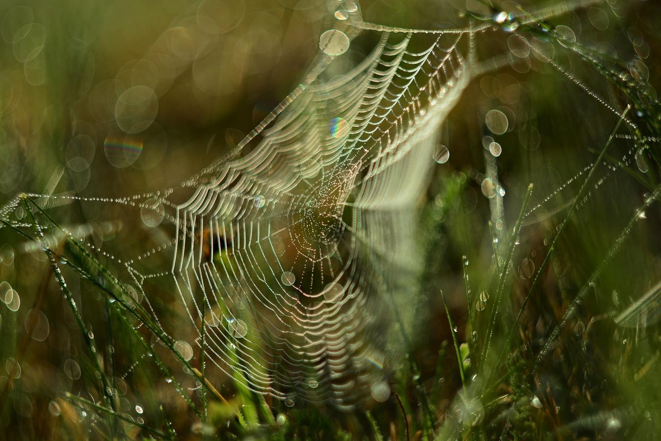 Pavoučí bokehovka