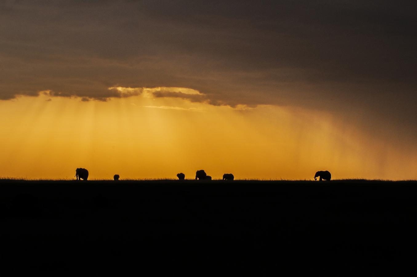 Sloni v dešti
