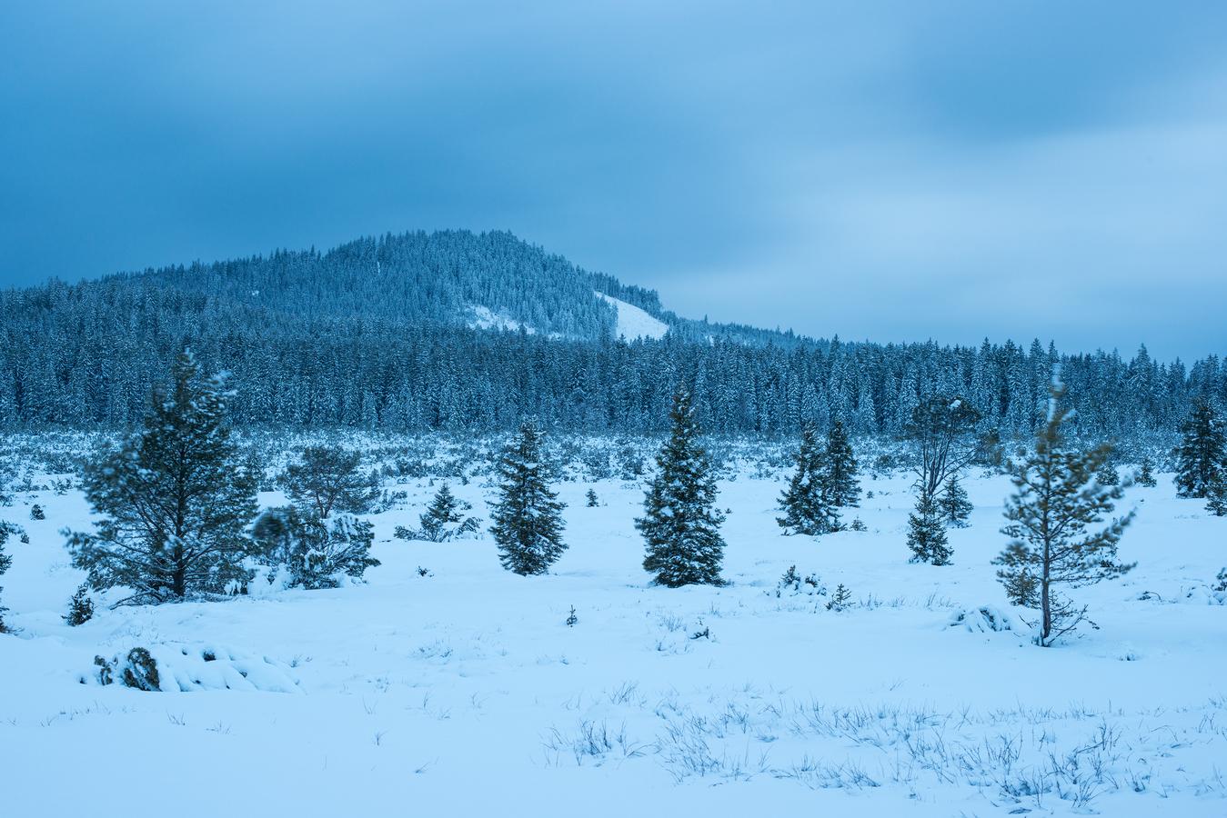 Slať v zimě