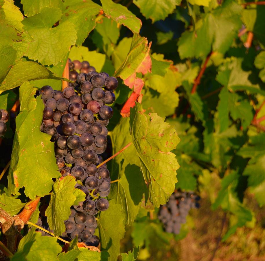 blíží se vinobrní