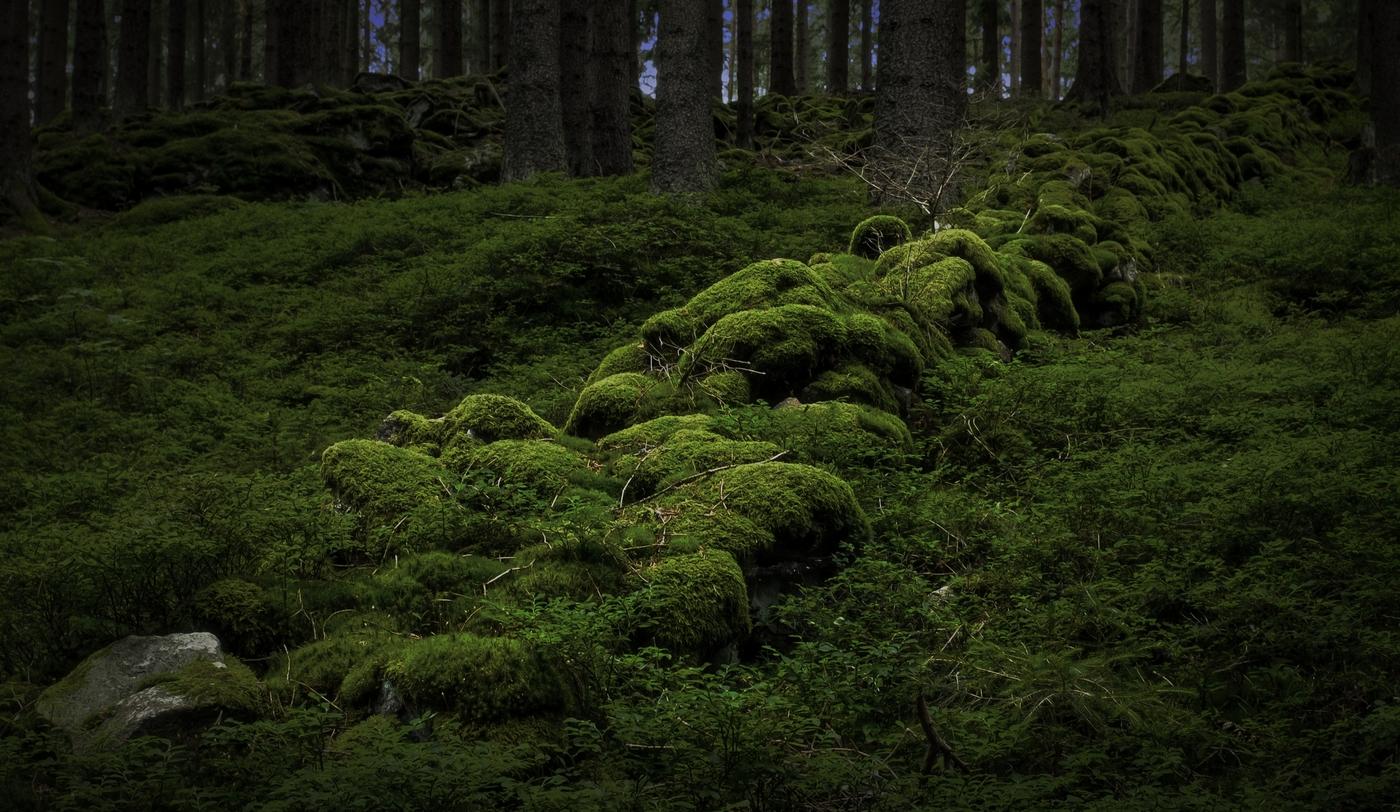Večer v lese