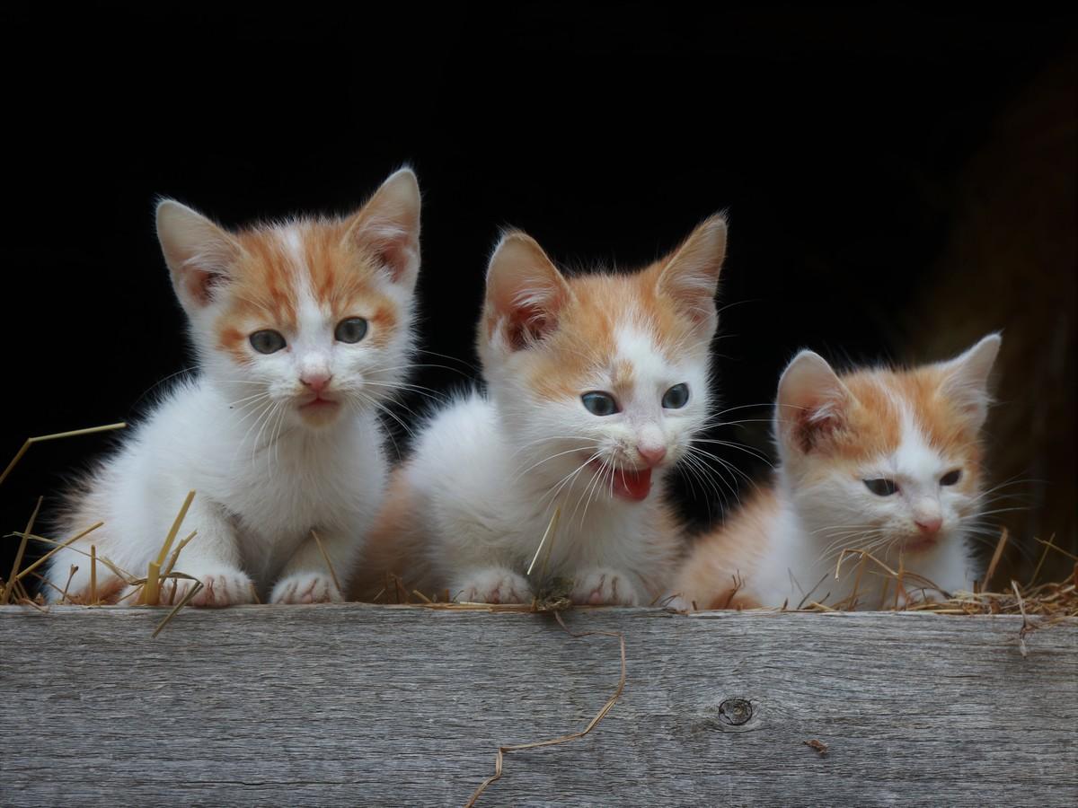 malé kotě