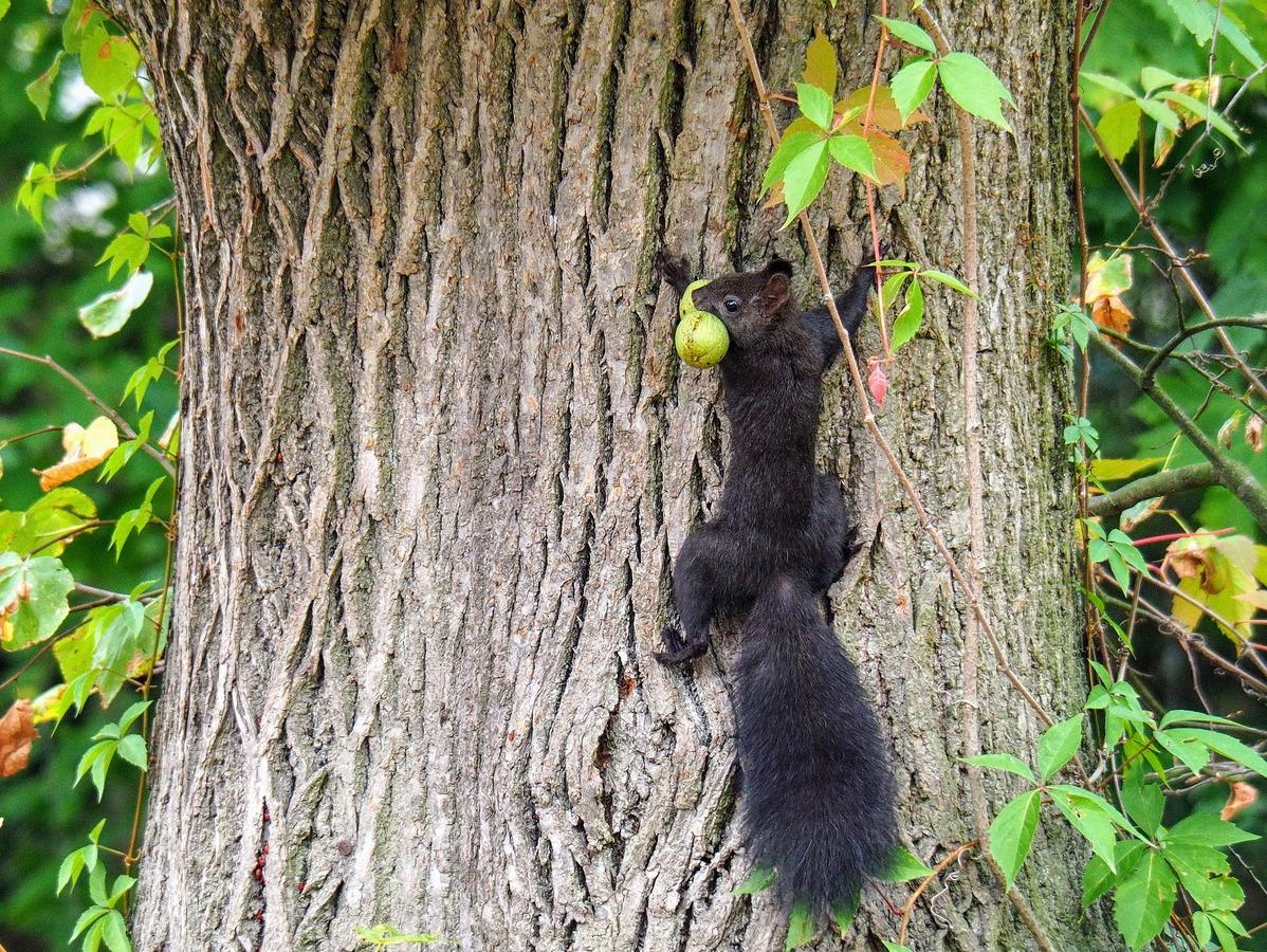Sklizeň ořechů - cesta do bezpečí