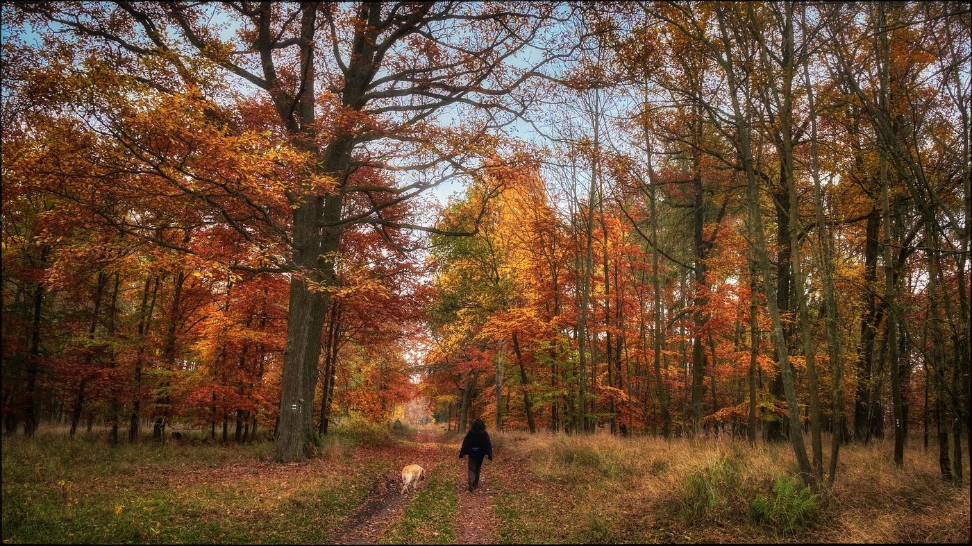 Po cestách podzimu V
