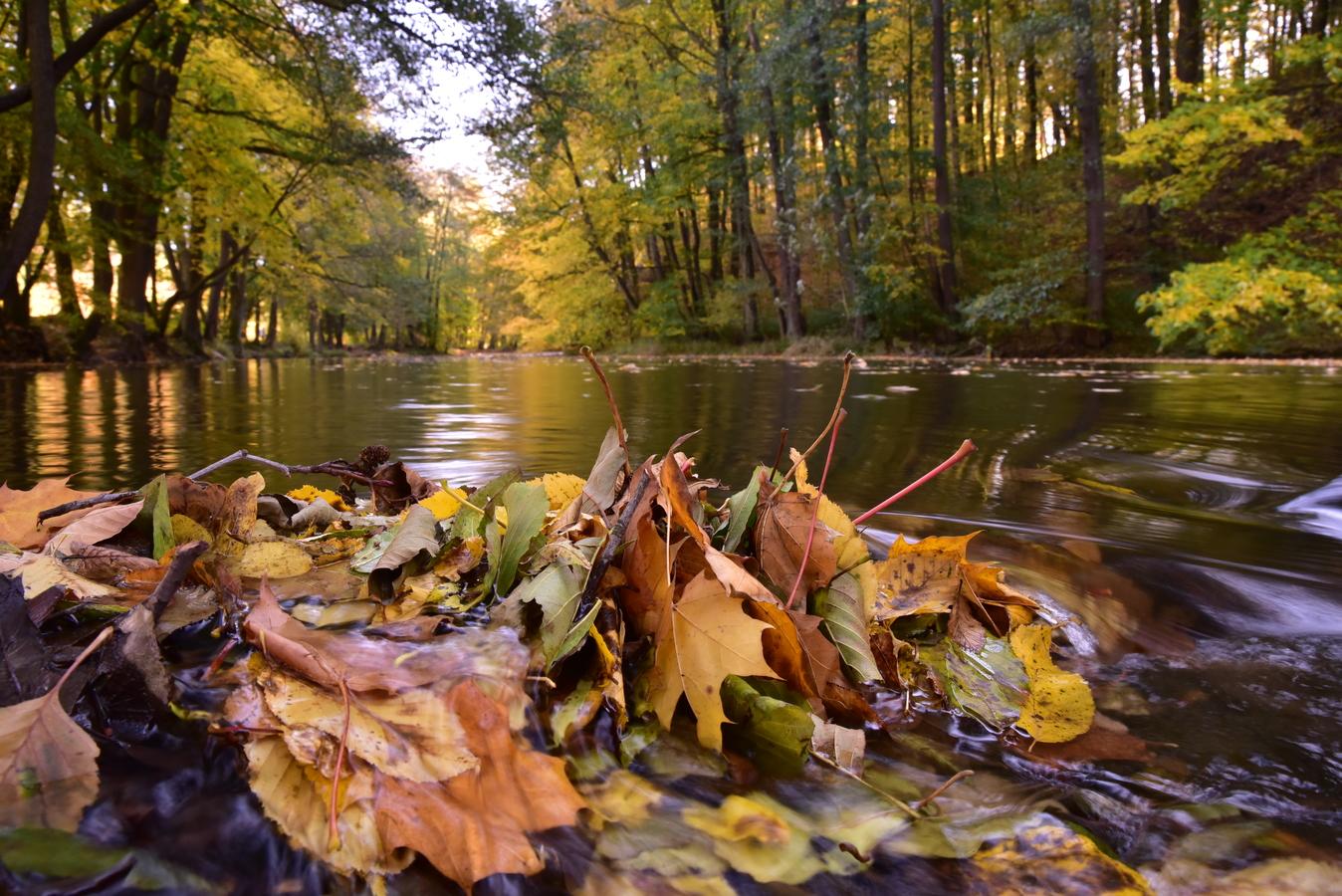 Podzimní různorodost