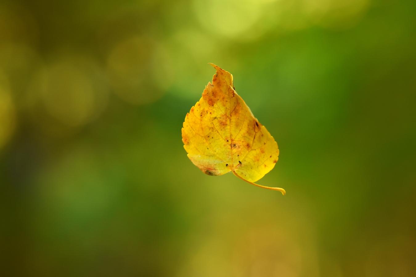 Padající list