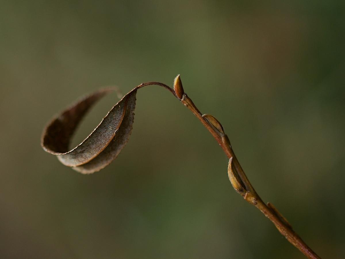 větvička podzimu
