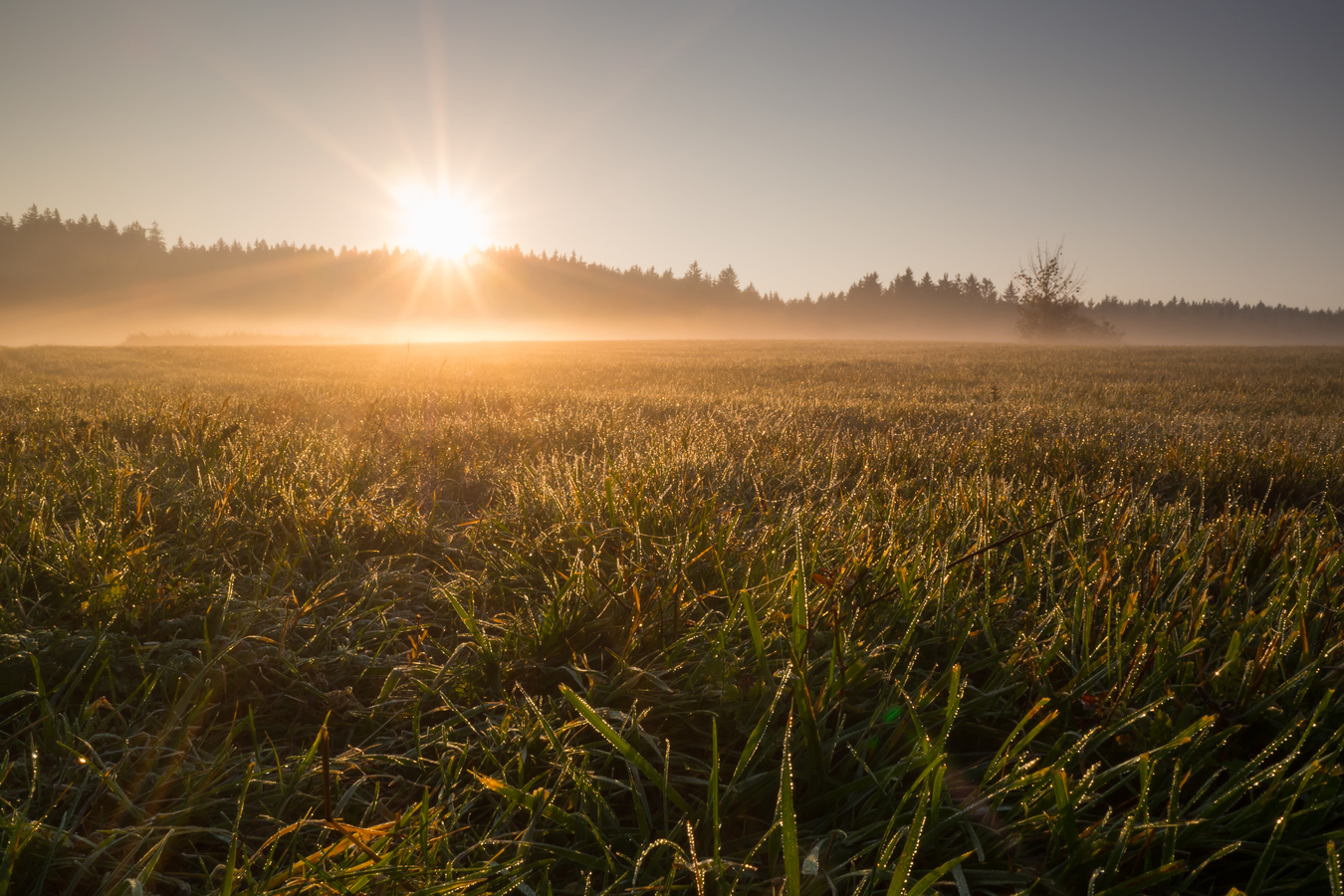 ranní louka