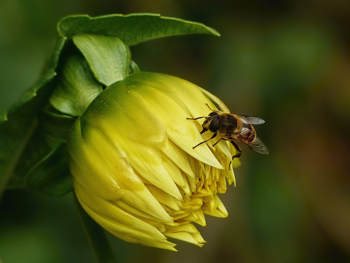 Poslední včelička....