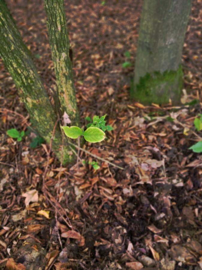 Poslední zeleň podzimu