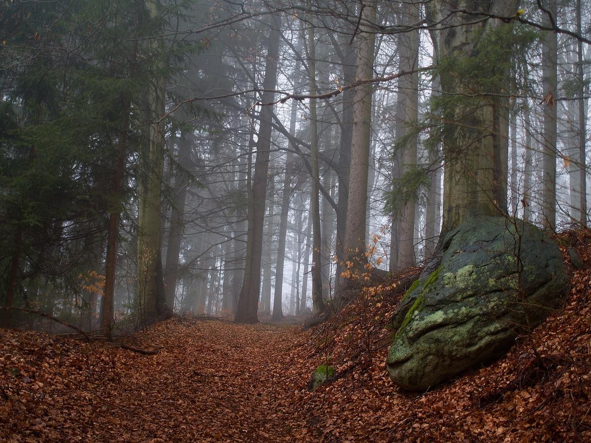 Lesní cestou za mlhou