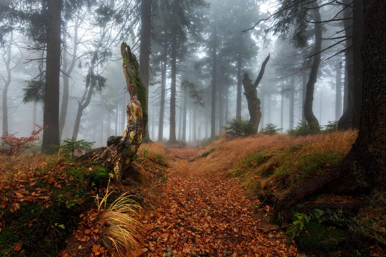 Lesní strážci
