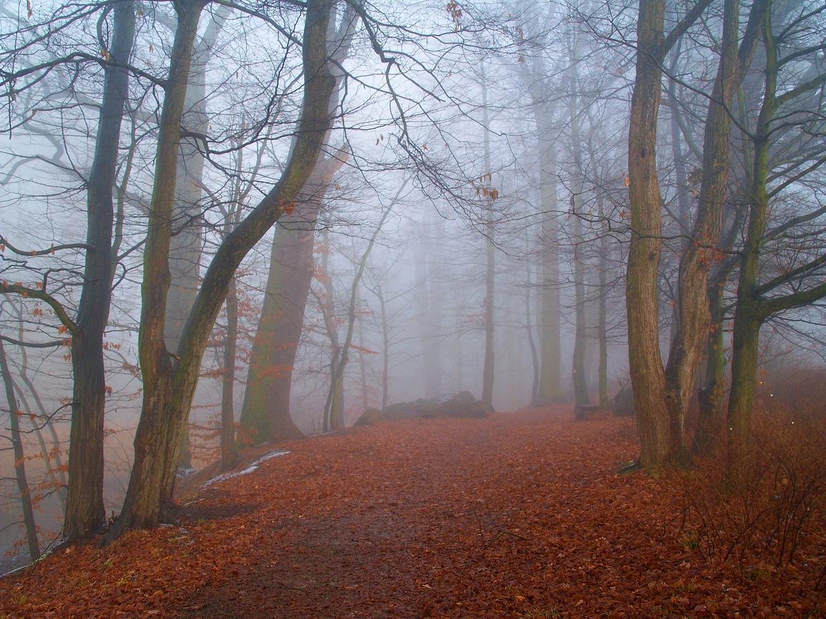 Mlha kolem