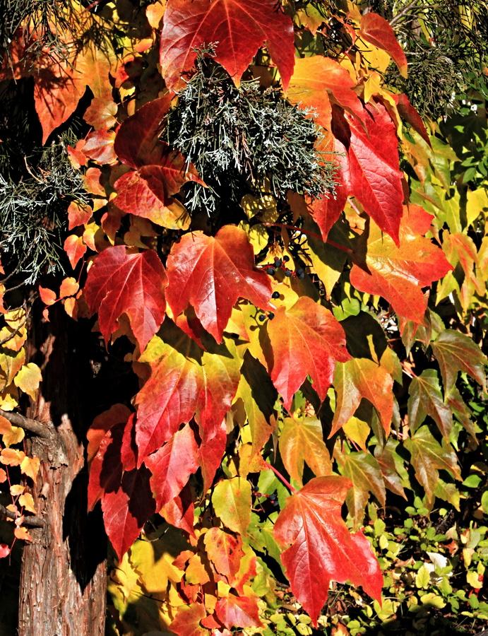Přišel podzim