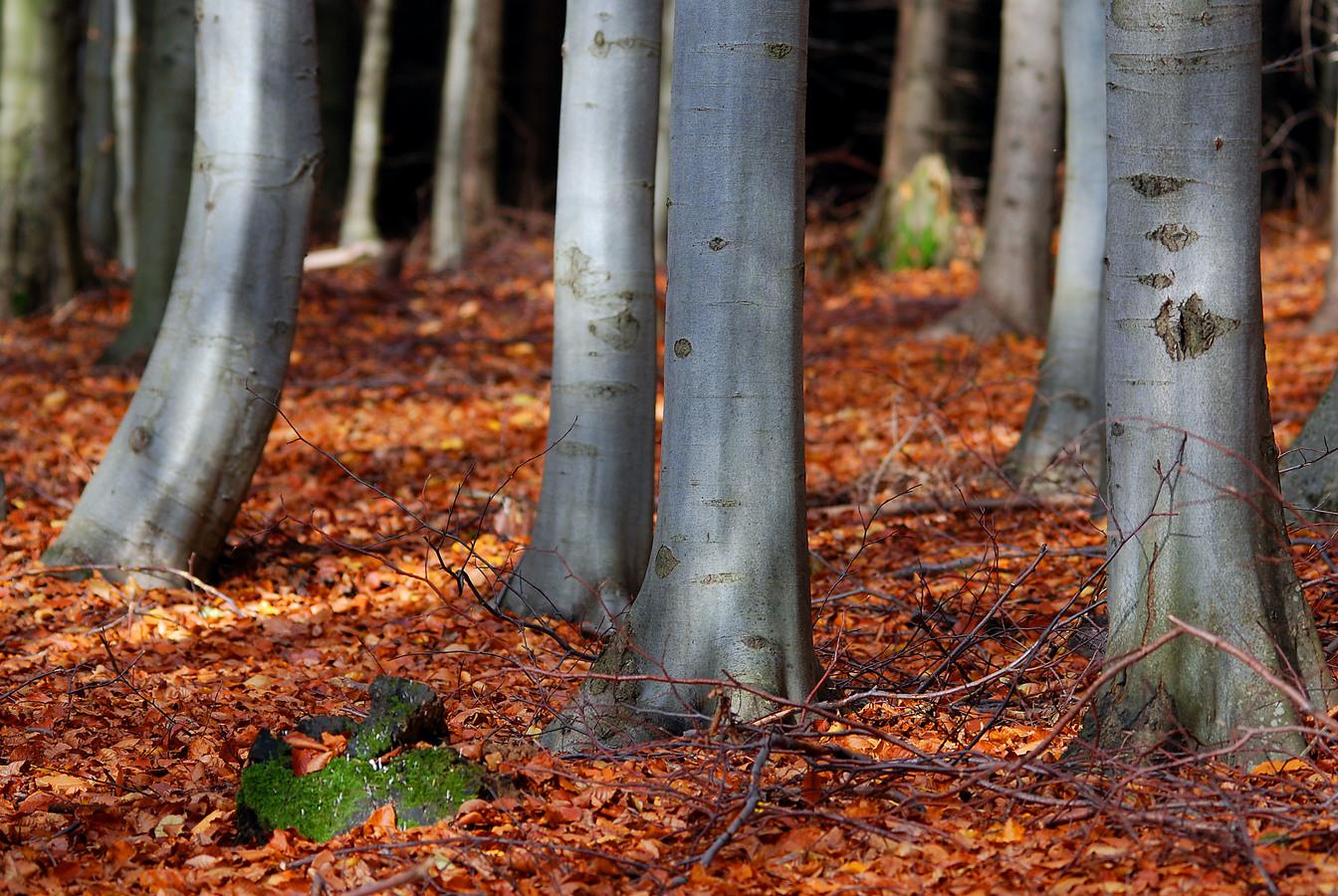 Bukový les...