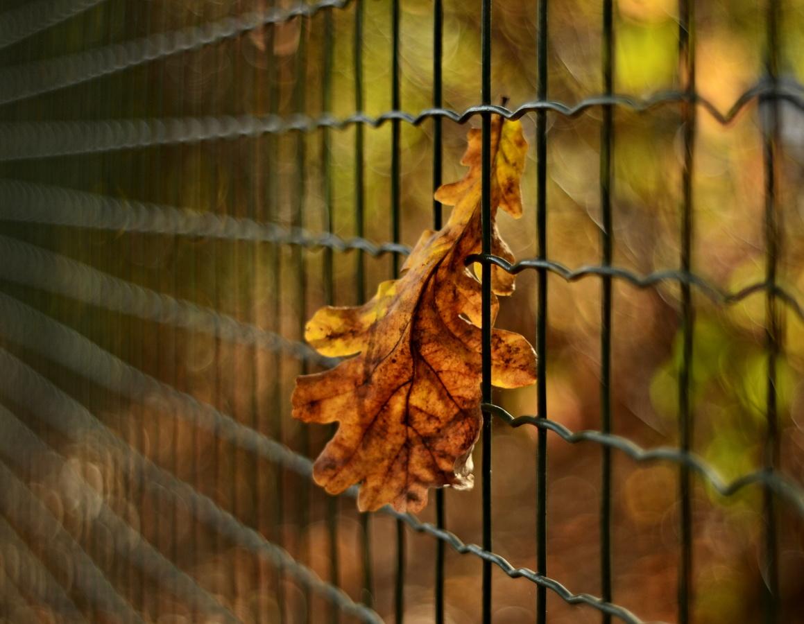 sám v plotě :-)