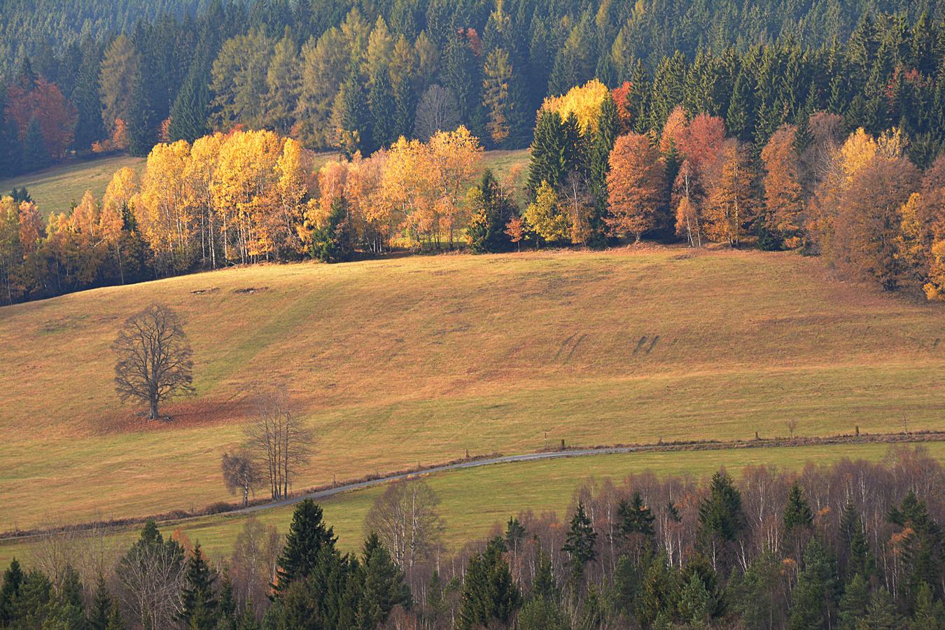 Barevný podzim...