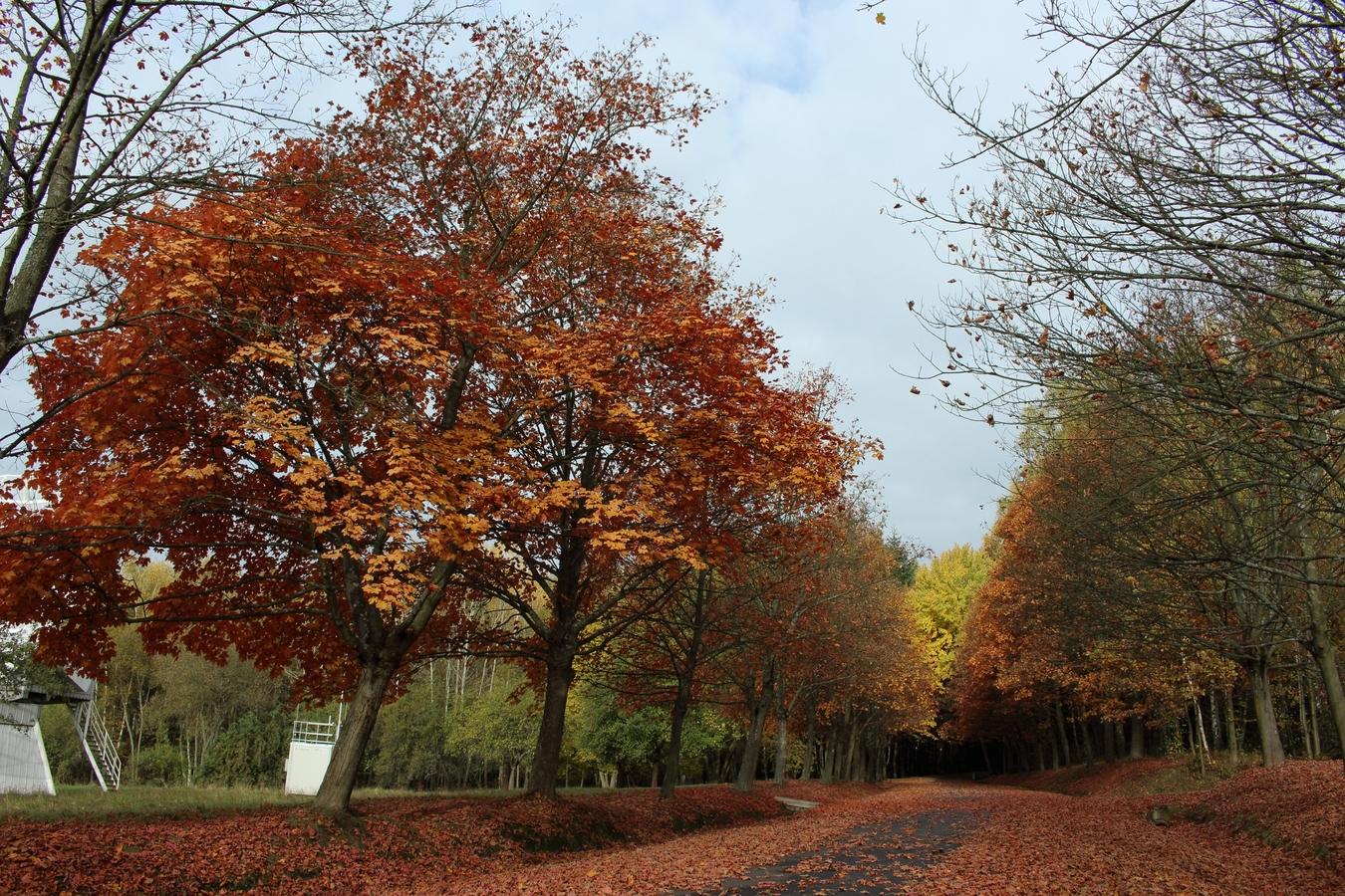 Podzimní radovánky
