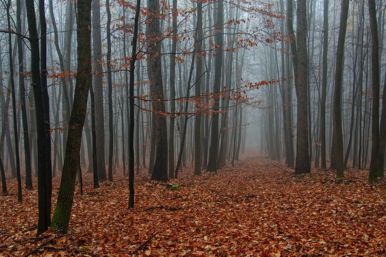 V lese pod Buchlovem