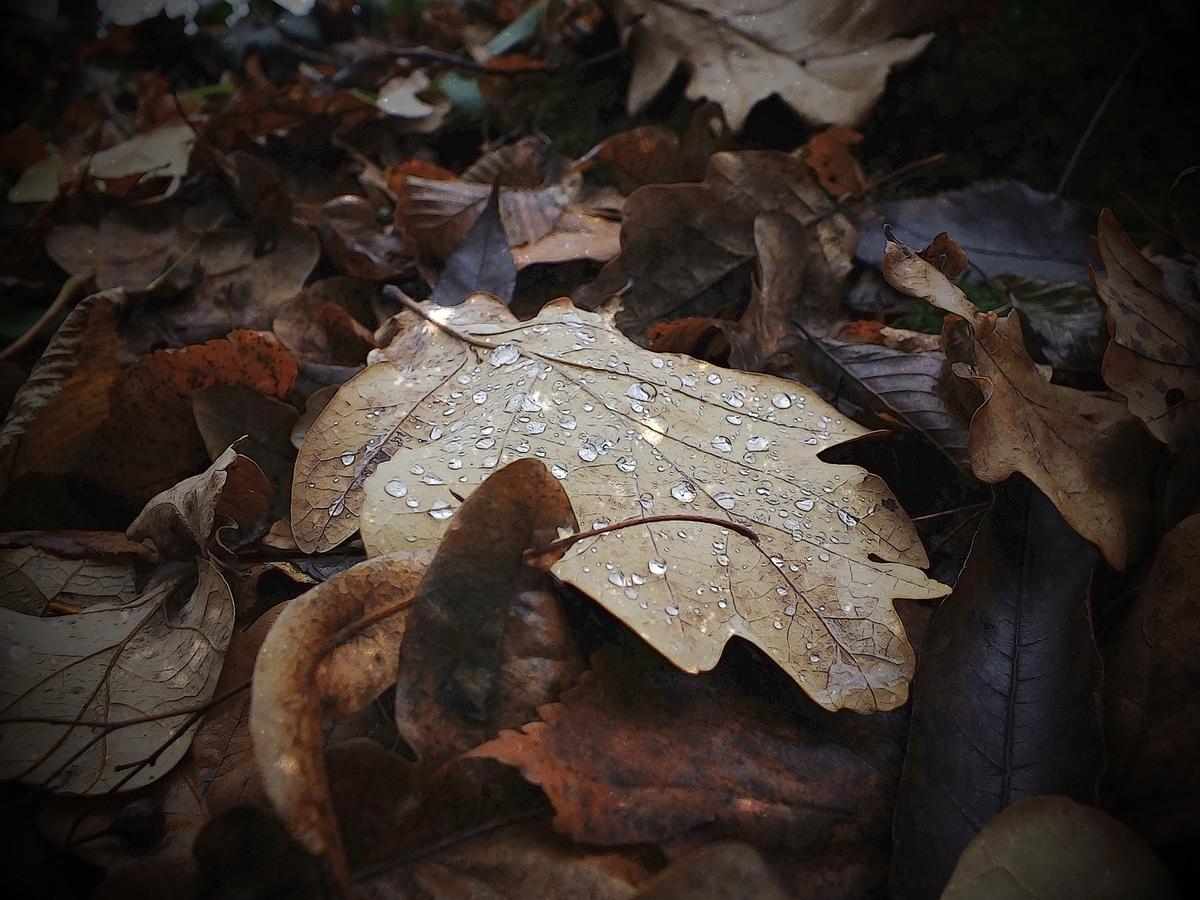 podzimní déšť