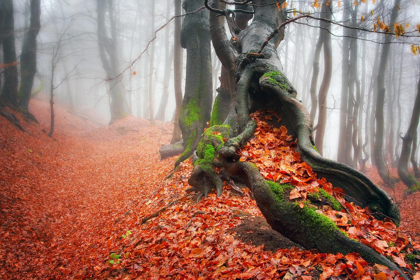 ...a byl podzim