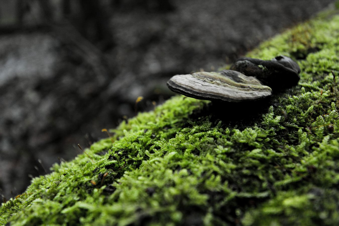 Ve stínu lesa...