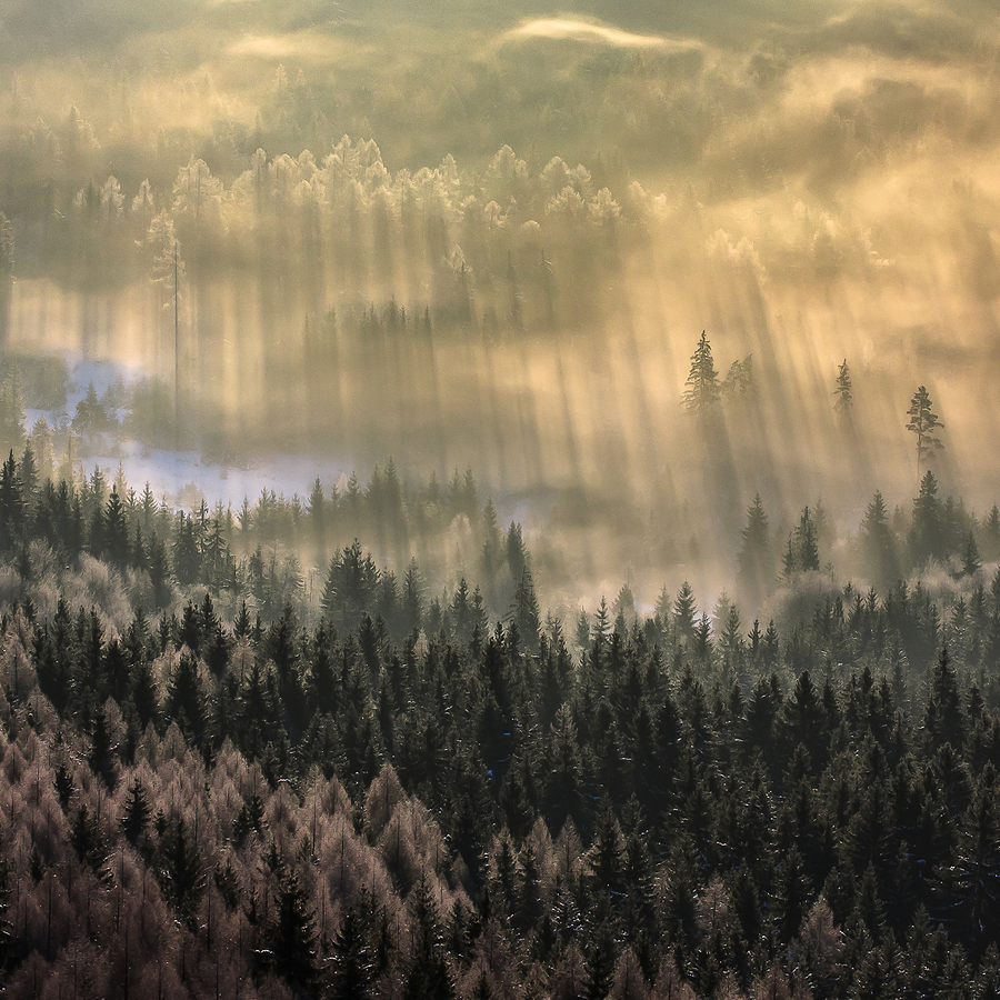 Hmly pod Mníchom