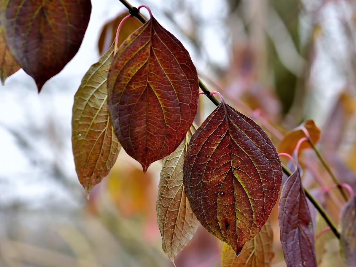 Listová,podzimní