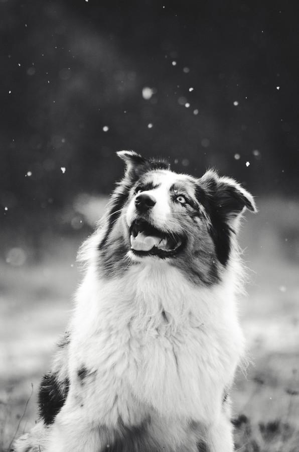 Když začne sněžit, hned je svět jiný.