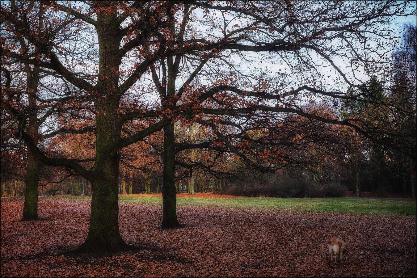 Než opadá listí z dubů