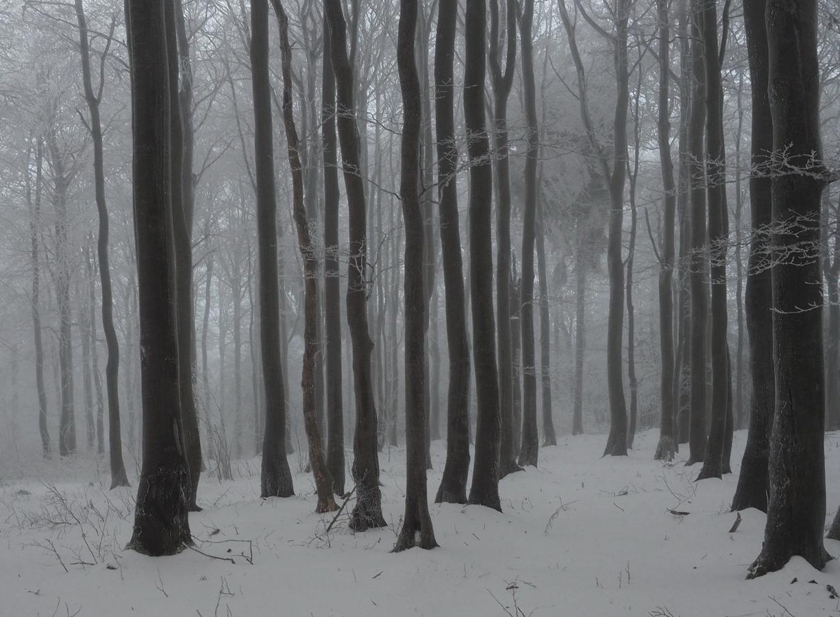 Tajemný mlžný les v zimě.