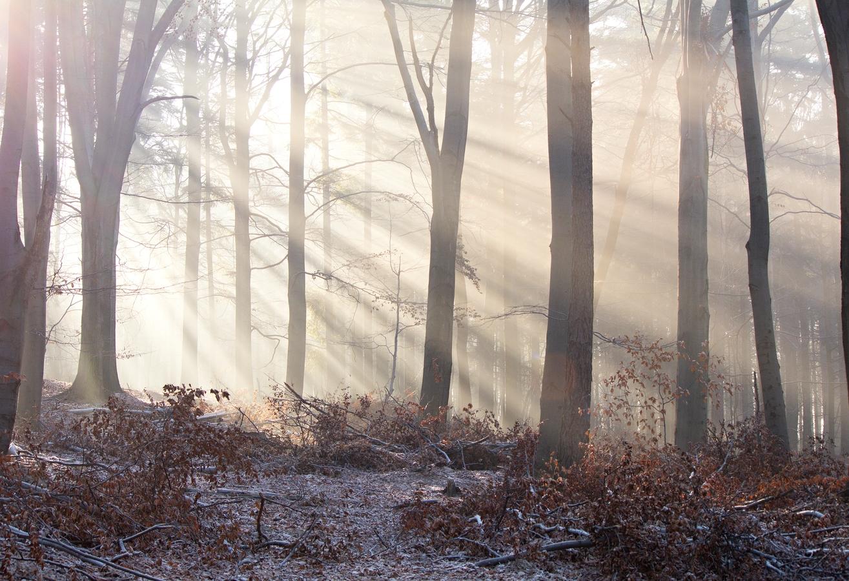 Neuklizený les
