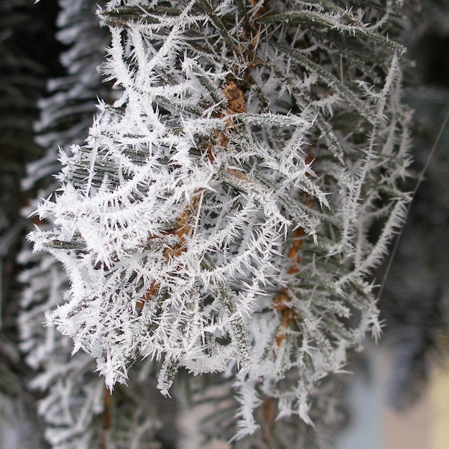 Ledové pavučiny
