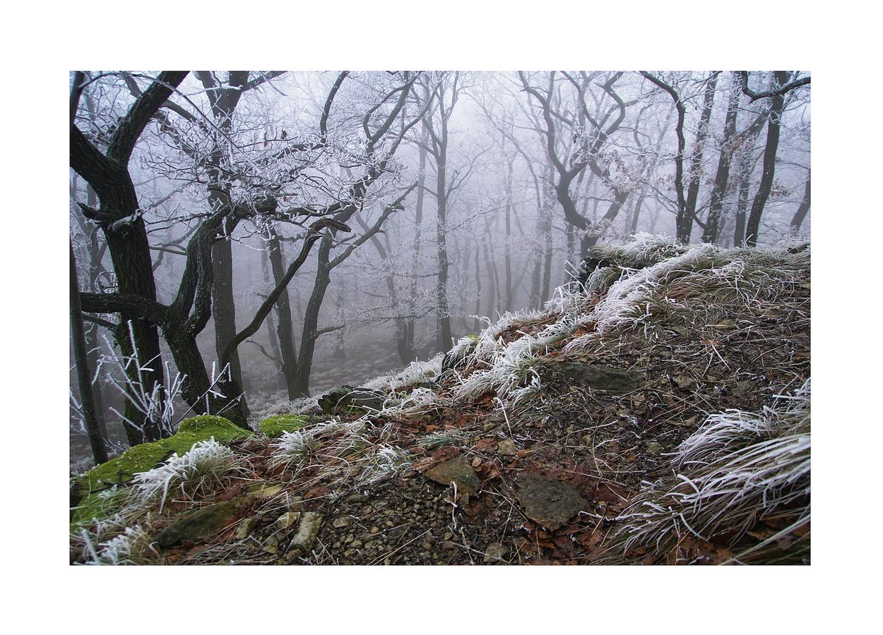 ...mlhavé ráno na Lovoši...