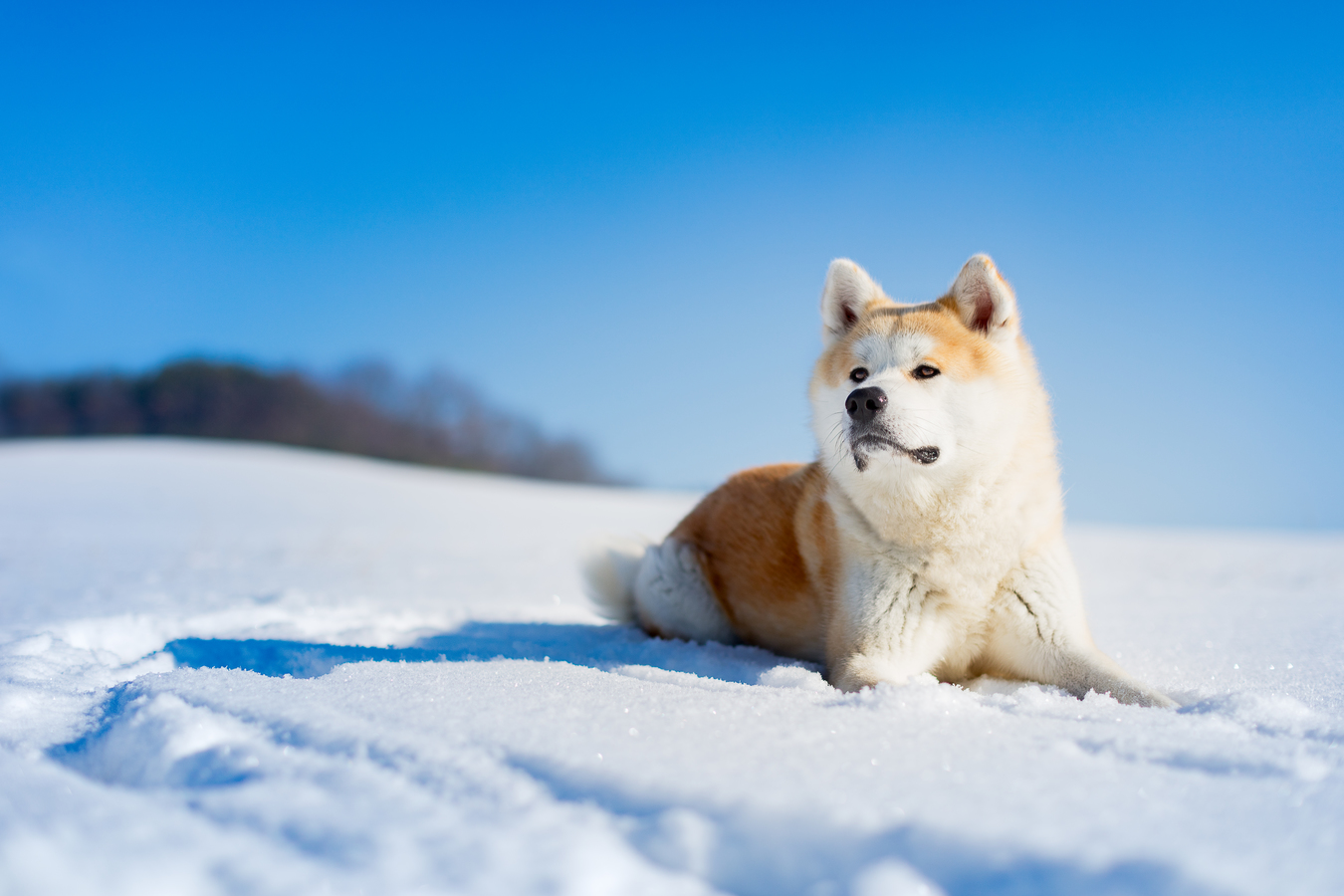 Zimní psí portrét
