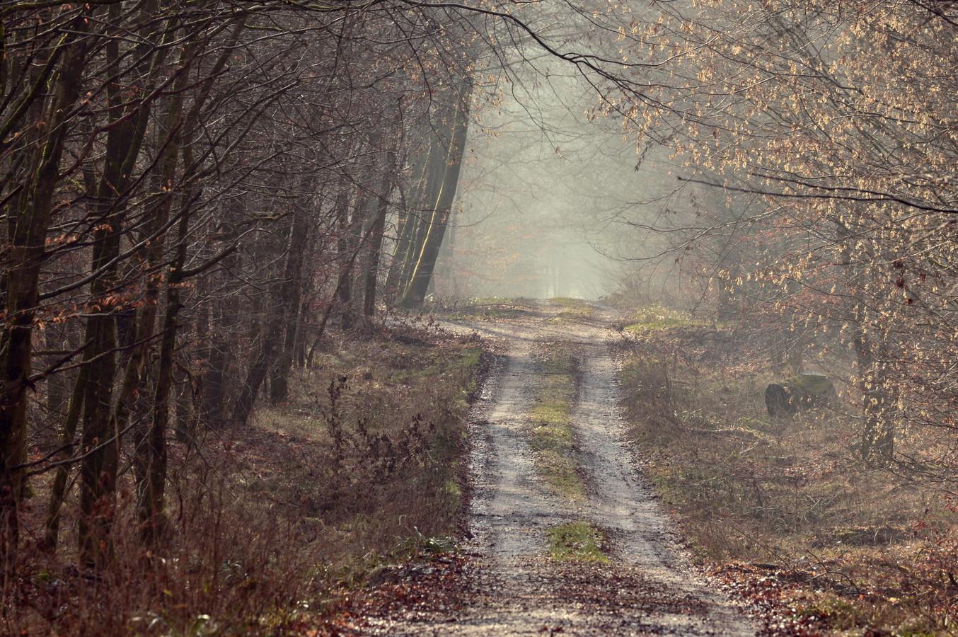 cesta do mlhy