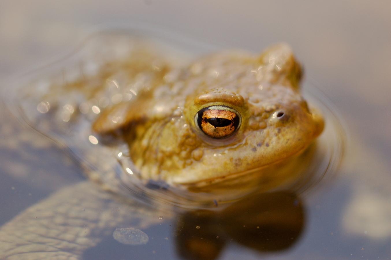 Žába...