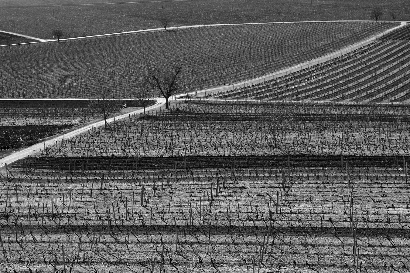 Cesty vinohradem