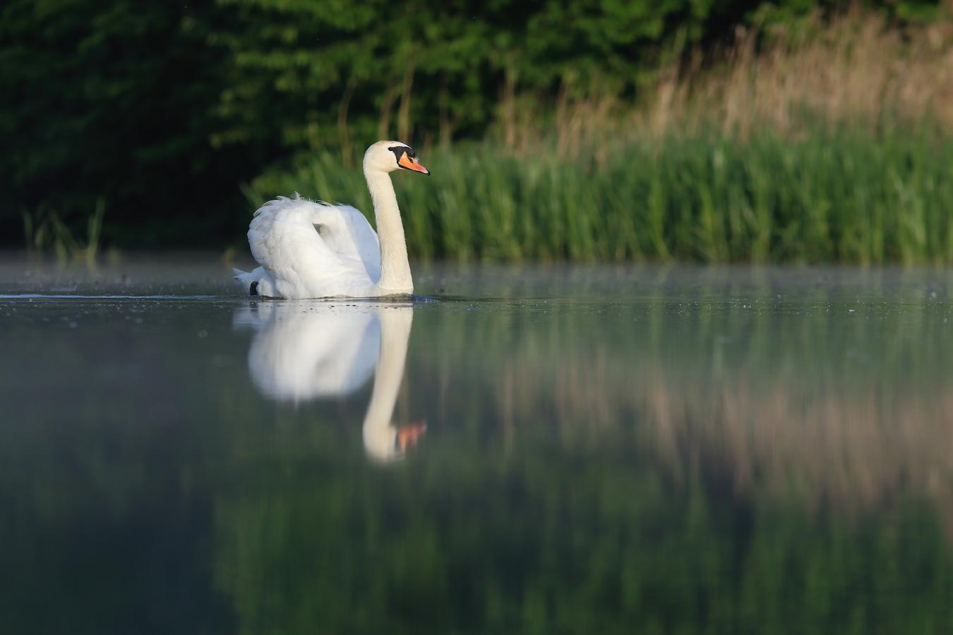 jedno ráno u vody
