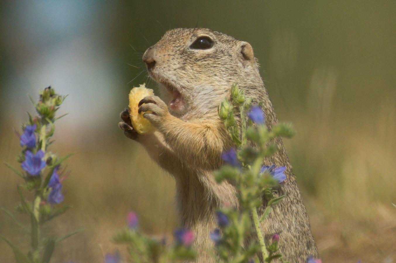 oběd mezi květy