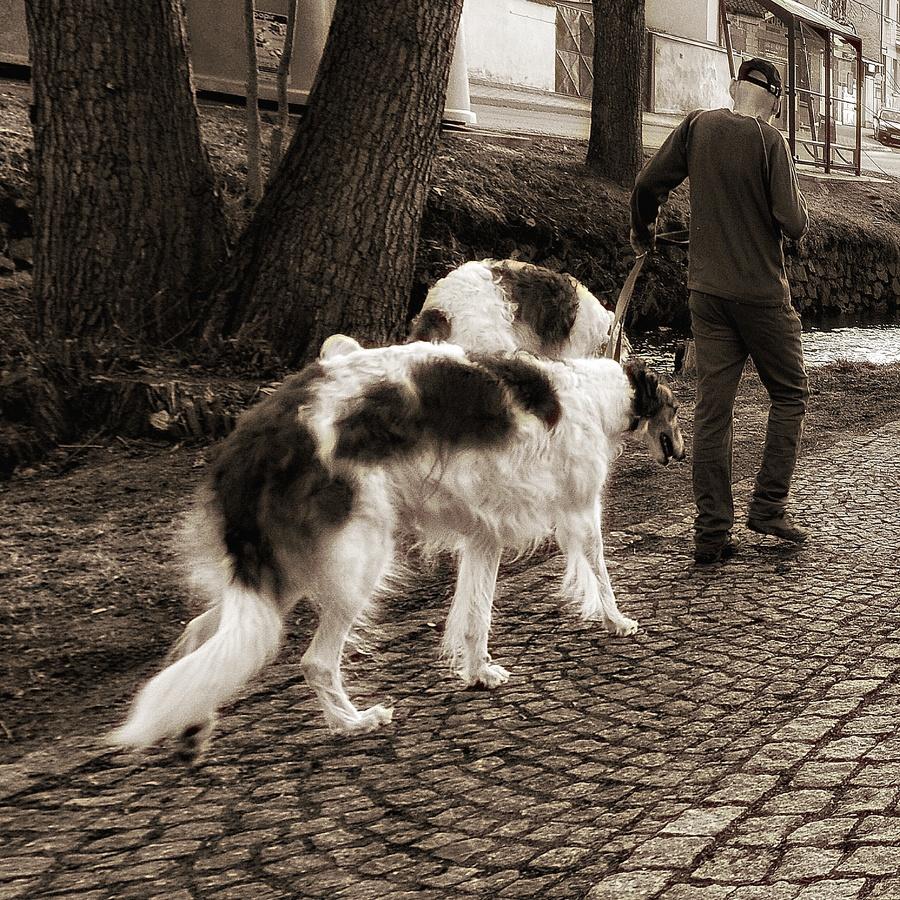 Život pod psa..